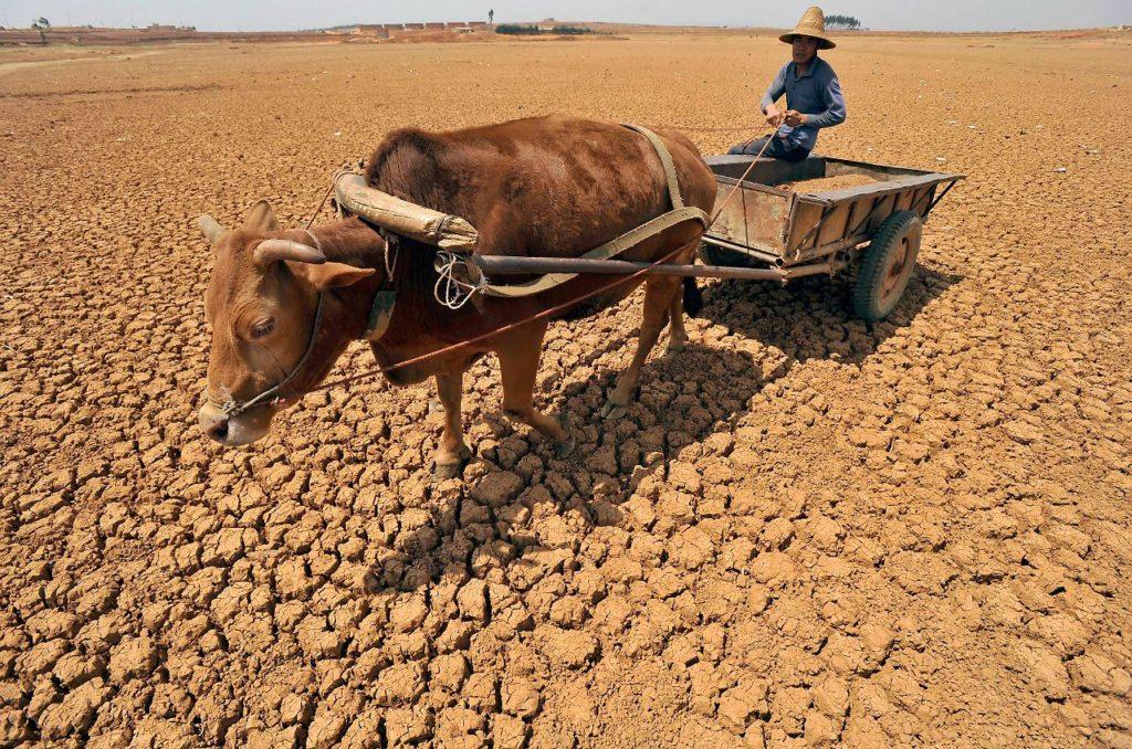 Dürre China Naturkatastrophe