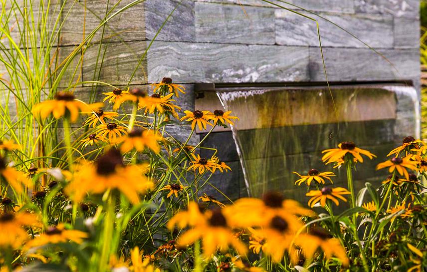 Hoffmann Showgarten Wasser aussen Blumengewächs